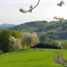 Pfälzerwald – Dahn – Jungfernsprung