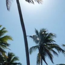 Der gute Urlaub in der Dominikanischen Republik