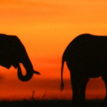 Das ostafrikanische Land: Kenia